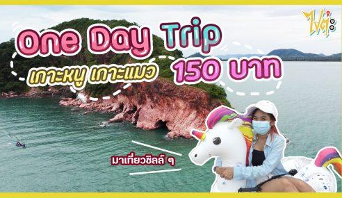 พาเที่ยว One Day Trip เกาะหนูเกาะแมว จ่ายแค่ 150 บาท | ไปต่ะ